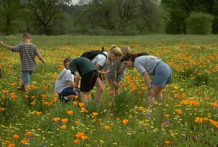 Spring flowers and kids redding california redding real estate spring flowers redding ca mightylinksfo