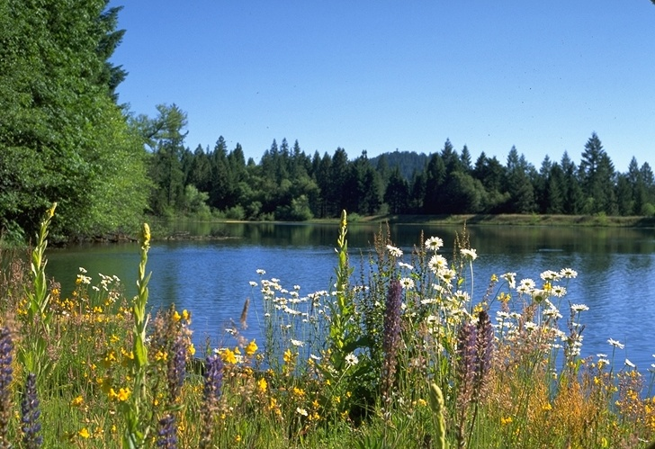 Spring Flowers and Water, Redding California, Redding Real ...
