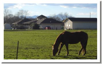 Millville horse in pasture, just outside Redding California