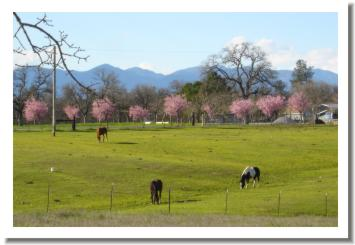 Palo Cedro Horses, just outside Redding California