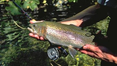fishing-rainbow-trout