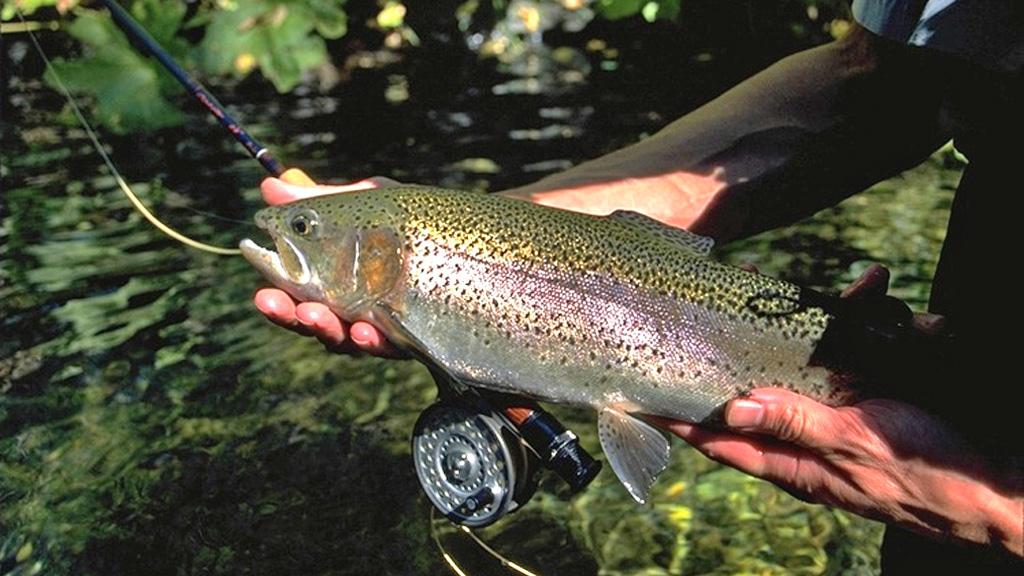 fishing-rainbow-trout